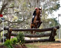 Horse jumping a barrier in a horse trial. Red Hills Horse Trials in Tallahassee, Florida. A chestnut horse and rider jump a wooden barrier Royalty Free Stock Image