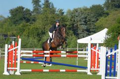 Horse jumping. Bay horse jumping high shiny royalty free stock images
