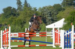 Horse jumping. Bay mare jumping showjumping high pretty Royalty Free Stock Photos