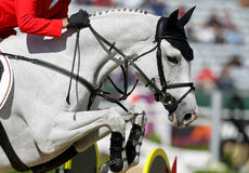 Horse jumping. Beautiful white horse jumping at a horse show Royalty Free Stock Photo