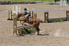 Horse jumping Royalty Free Stock Photo