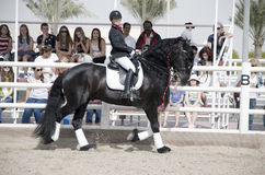 Horse Jumping Championship. In Dubai Stock Images