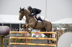 Horse Jumping Championship. In Dubai Stock Photos