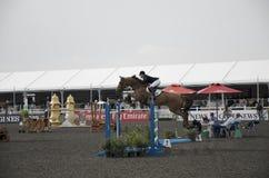 Horse Jumping Championship. In Dubai Royalty Free Stock Photo