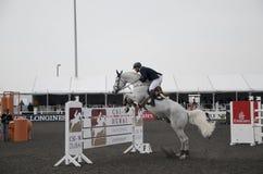 Horse Jumping Championship. In Dubai Royalty Free Stock Photos