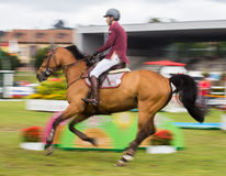 Horse jumping competition Royalty Free Stock Image