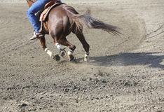 Horse jumping from earth Stock Photography