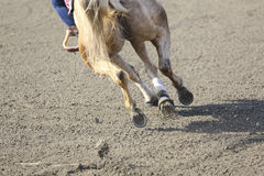 Horse jumping from earth Royalty Free Stock Photos