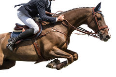 Horse Jumping, Equestrian Sports, Isolated on White Background Stock Image