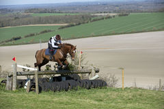 Horse jumping a fence in English countryside Stock Image
