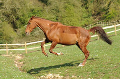 A horse jumping in field Stock Image