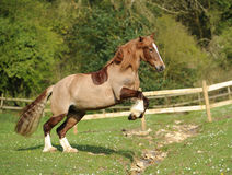A horse jumping in field Stock Photos