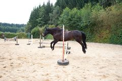 Horse jumping free without rider. Horse training with fun