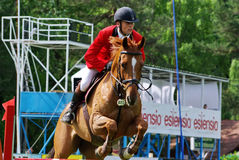 Horse jumping hurdle Stock Image