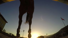 Horse jumping hurdle at sunset, silhouette rider