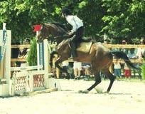 Horse jumping hurdles Stock Images