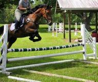 Horse jumping hurdles stock photography