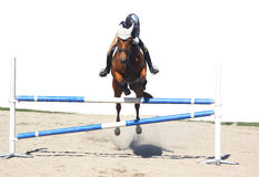 Horse jumping, isolated Royalty Free Stock Image