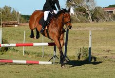 Horse jumping a jump Royalty Free Stock Images