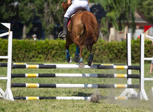 Horse jumping Royalty Free Stock Image