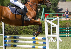 Horse jumping Royalty Free Stock Photography