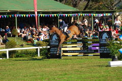 Horse jumping - Lara Neill Royalty Free Stock Photo