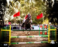 Horse jumping in championship Royalty Free Stock Images