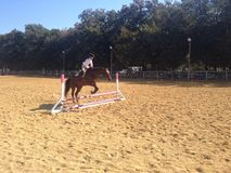 Horse jumping over fence Royalty Free Stock Photos