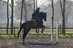 Horse jumping over the hurdle royalty free stock images