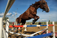 Horse jumping over a hurdle Royalty Free Stock Images