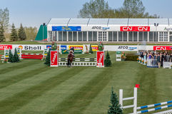 Horse jumping Royalty Free Stock Image