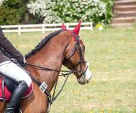 Horse jumping Stock Photos