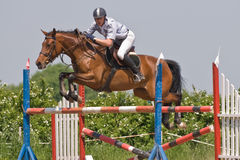 Horse jumping show. Brown mare and rider jumping on the horse jumping show Royalty Free Stock Photography