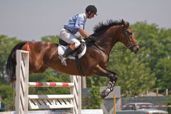 Horse jumping show. Brown stallion and rider jumping on the horse jumping show Royalty Free Stock Photo