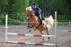Horse jumping. Horse show jumping with woman rider Royalty Free Stock Image