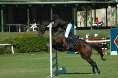 Horse jumping sport Stock Image