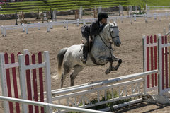 Horse jumping sport. Bromont june 14, 2015 a young woman horse rider jumping a hurdle with his beautiful white sport horse in a competition of an equestrian Stock Photos