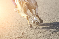 Horse jumping in sunset Stock Photography