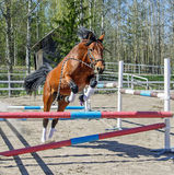 Horse jumps alone Royalty Free Stock Photo