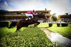 The horse jumps the obstacle. Jockey on his horse. The obstacle is a hedge and a river. Hippodrome of Merano Maia (Tyrol), season 2009. Background there are Stock Image
