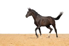 Horse jumps on sand on a white background stock photos