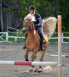 Horse jumps Stock Image