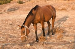 Horse in Karpaz Stock Photo