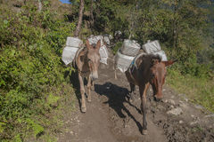 Horse. KHARIKHOLA, NEPAL - CIRCA OCTOBER 2013: in the mountains of transport is mainly on the backs of pack animals circa October 2013 in Kharikhola Stock Photos