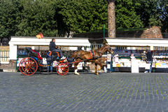 The horse is king in rome Stock Photography
