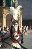 Horse  in Krakow Royalty Free Stock Photo