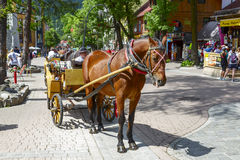 Horse at Krupowki street in Zakopane Stock Images
