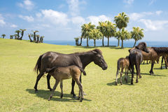 Horse lactating in seashore Stock Images