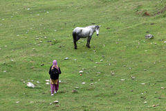 Horse and a lady in a field. A lady walking toward horse in a field, Shimla, Himachal Pradesh, India, Asia Stock Images