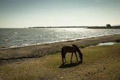 Horse at lake Managua in Granada, Nicaragua Royalty Free Stock Photography